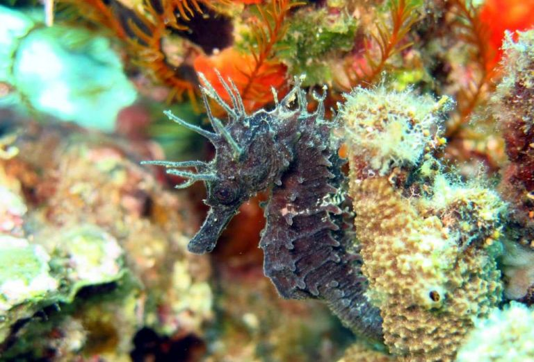 seahorse night diving Bali Crete